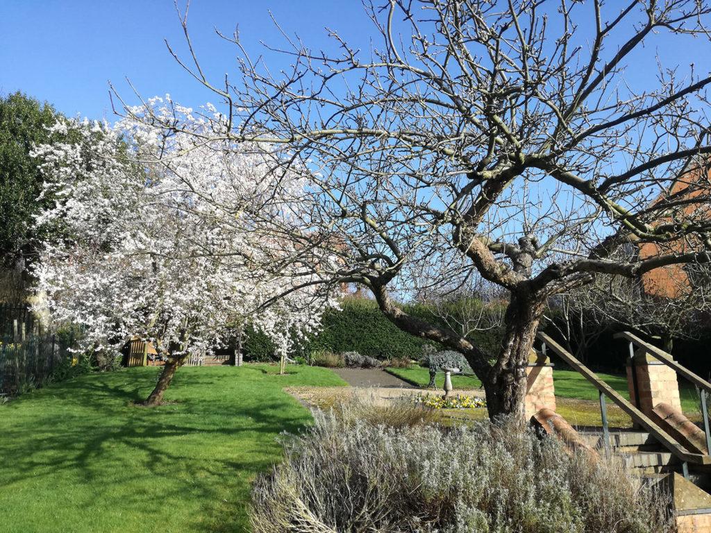 Blossom in Hill Close Gardens