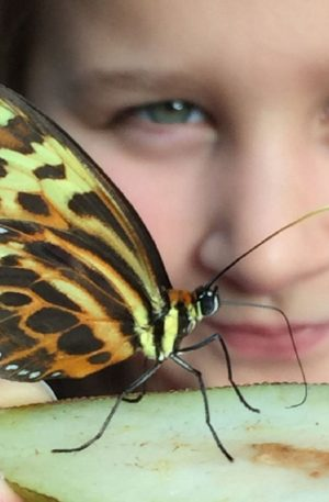 Girl looking at butterfly + Pre-Booking