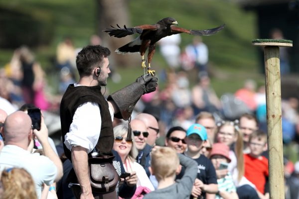 Falconry display at Warwick Castle